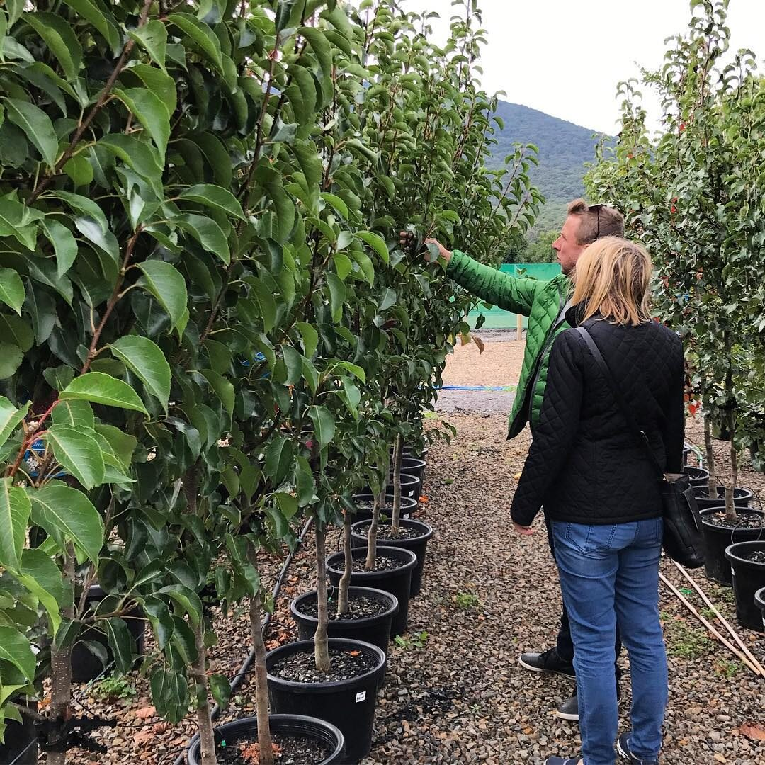 Visiting the nursery for plant selection